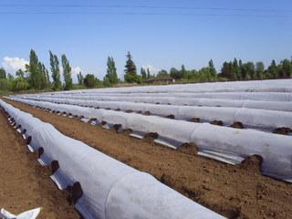 Juta Netkaná zakrývací textilie 19g 1.6x100m bílá role